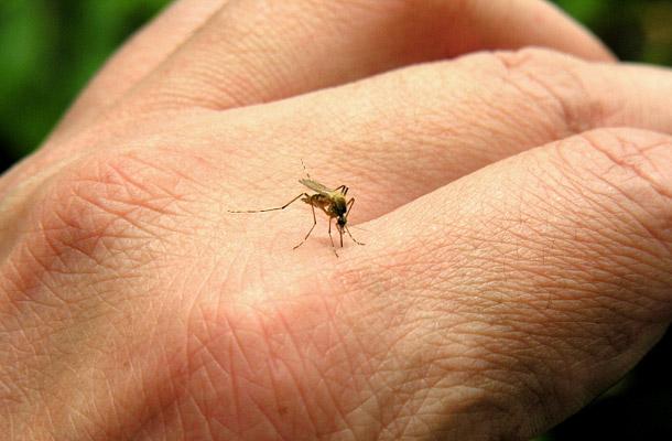 Hamarosan megkezdődik az idei első szúnyoggyérítés