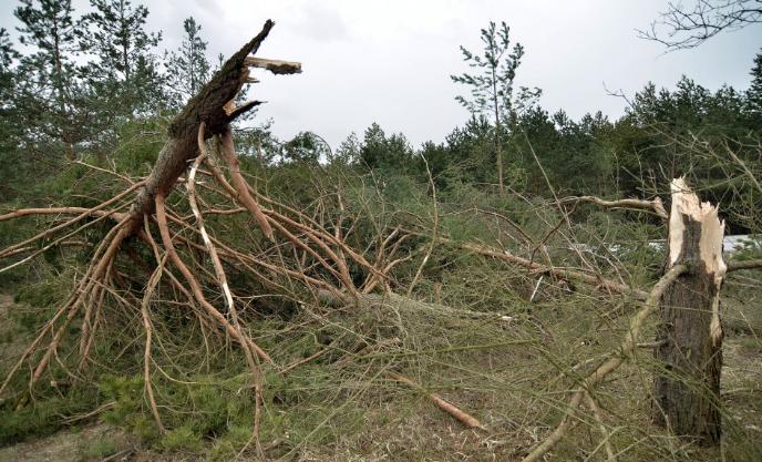 Vasárnapi vihar: áramkimaradás Rákóczifalván, letört faágak megyeszerte, megsérült emberek