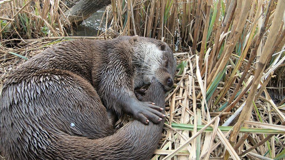 Interjú: Így látja a Tisza-tavat a természetfilmes